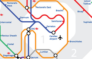 Infographics of Human Body in Tube Map Style